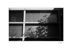 Lineal #1 (radspix) Tags: minolta 7000i 3570mm af zoom f4 kentmere 100 pmk pyro