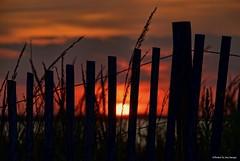 Sea life's beauty....HFF!!! (Joe Hengel) Tags: sealifesbeauty lewesde lsd lowerslowerdelaware lewes sussexcounty de delaware darkness evening eveninglight eveningskies fence fenceline fencefriday friday fencepost silhouette silhouettes sunset sun sunlight sky clouds dunegrass dune delawarebay horizon watchingthesunset hff capehenlopen capehenlopenstatepark park statepark