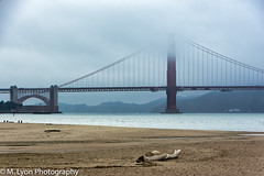 (ishigakijin) Tags: california city nikon nikond7200 sanfransisco summer travel usa