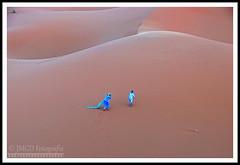 Sand and Wind (jose_miguel) Tags: jose miguel rigotag españa spain espagne panasoniclumixfz50 panasonic lumix marruecos maroc morocco desierto desert désert merzouga merzuga dunas dunes arena sand sable viento wind vent sahara sáhara color couleur colour contraste contrast