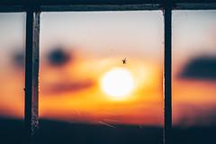 Spider | Kaunas #255/365 (A. Aleksandravičius) Tags: spider spiderweb web cobweb sky kaunas sunset sun lietuva evening lithuania nikon z 7 nikonz7 z7 mirrorless nikkor 85mm 85 2019 365 3652019 85mmf18g nikkor85mm nikon85mm18g f18g nikon85mm project365 255365