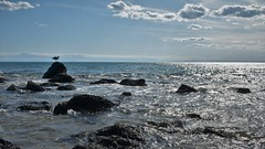 Josy en vacances☺️ (jmollien) Tags: mer mediterrannee méditerraneansea gabian goéland rocher contemplation repos beach beauté beautiful seagull plage