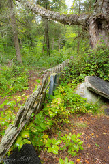 Forever A Mystery (maureen.elliott) Tags: happyfencefriday fence overgrown remote old cemetary mystery canoelake algonquinpark