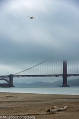 (ishigakijin) Tags: california city travel summer usa nikon sanfransisco nikond7200