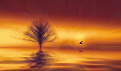 Solitude 27b (Wim Koopman) Tags: tree light horizon sky beams different colors surreal surrealism digital art drawing falcon flight flying water reflection sparkle flowing glowing