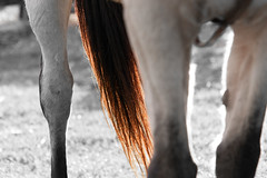 Things of Horses (Petoskey Drones) Tags: horse cheval equine closeup