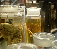 Naturkundemuseum_e-m10_1011073497-1 (Torben*) Tags: rawtherapee olympusomdem10 olympusm25mmf18 berlin naturkundemuseum berlinmitte