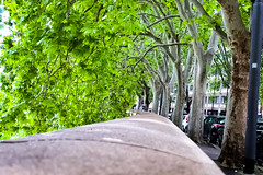 Lungo Tevere (Nabel Grant) Tags: nature spring green pretty beautiful