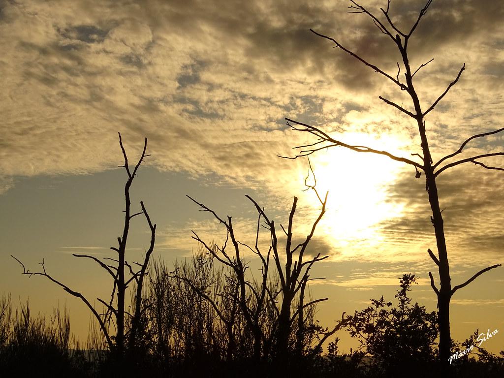 Águas Frias (Chaves) - ... fim de tarde e ramos secos ...