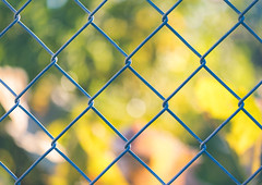 fall fence (auntneecey) Tags: fencefriday fencedfriday fence chainlinkfence