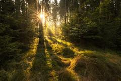 Forest magic (Sebo23) Tags: forest wald sonnenstrahlen sunbeams sunstar sonnenstern landschaft landscape licht light lichtstimmung gegenlicht nature naturaufnahme canoneosr canon16354l