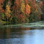 Wakulla River, below Wakulla Springs, Edward Bell Wakulla Springs State Park, Wakulla County, Florida