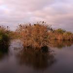 taylor slough, anhinga trail boardwalk, everglades national park, miami-dade county, florida