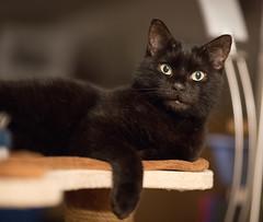 Lilli (rengawfalo) Tags: tier lilli katze cat animal pet haustier kitten auge eyes