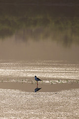 Haze and reflections (dean.duporte) Tags: bird waterbird fog hazy reflection pond moring