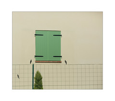 trist composition in 6x7 (Armin Fuchs) Tags: arminfuchs nomansland house fence tree window blinds shadows 6x7 composition anonymousvisitor thomaslistl wolfiwolf jazzinbaggies poétique green