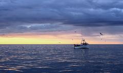 Going Fishing (Danny VB) Tags: gaspesie canada sunriseship boat fish fishing gaspésie poissons pêche pêcheurs canon 6d dannyboy granderivière