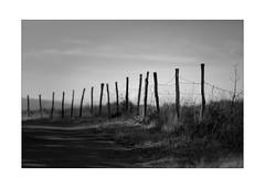 endless fence (Armin Fuchs) Tags: arminfuchs nomansland fence horizon grass meadow sky anonymousvisitor thomaslistl wolfiwolf jazzinbaggies moody shadows
