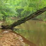 Shoal Creek, downstream of Highway 54, U.S. Geological Survey sample site, Coweta County, Georgia