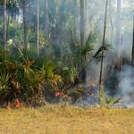 control burn, florida panther national wildlife refuge, collier county, florida