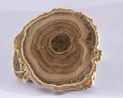 mineral (Grocci) Tags: mineral minerals quarz wood ancient stone