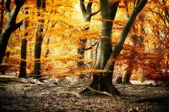 Sweet Dreams (keesvandongen) Tags: heather sunset sunrise dusk dawn naturephotography nature mood light sunlight warm mist misty fog foggy water channel landscape landscapephotography skyscape sky night keesvandongen keske thenetherlands trees woods tree wood twilight