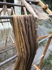 Dye #3 Avocado (lady-ursula) Tags: tin alum iron copper wool naturaldye avocadoskins avocado