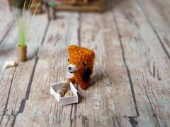 77-fox 15mm + cabinet (2) (tinyteensdolls) Tags: amigurumi artdoll amigurumidoll amigurumifox crochet crochetmini craft crochettoy crochetminiature crochetdoll crochetteddy miniature microcrochet mini minicrochet micro miniamigurumi toy tinyamigurumi tiny threadcrochet teddy tinyart tinyroom dollhouseminiatures dollhouseminiature small handmade