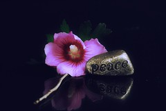 A flower to peace and a smile... (jrmcmellen) Tags: smilesforsaturday reflexionsinblack black flower peace reflexion gold lowkey