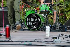 A Ferocious Jungle Cat at Hub and Soul 9.12.19