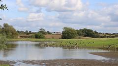 Fields Farm Flash (Wildlife Terry) Tags: fieldsfarmflash sandbach cheshire brantacanadensis canadageese