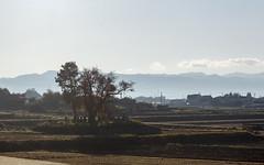 Rural cemetery, Nagano Prefecture, Japan (Ministry) Tags: cemetery nagano prefecture 長野県 japan 日本 japanesealps 日本アルプス wheat field haystack hokuriku shinkansen 北陸新幹線 nippon nihon tree autumn leaves