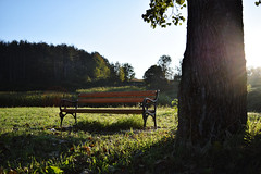 Bench in the Sun (DPozega) Tags: sunlight bench morning outdoor green trees tree outside light landscape grass nikon d3300