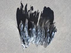 Edgy Objex (Robert Cowlishaw (Mertonian)) Tags: vertical recycling objex bypl backyardphotolab shadows cement concrete wavy texture mertonain robertcowlishaw canon powershot g1x mark iii canonpowershotg1xmarkiii grey gray