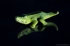 Allie's First Photo Shoot (GoodLifeErik) Tags: toy alligator black green macro inside reflection reflectiononblack smileonsaturday fun