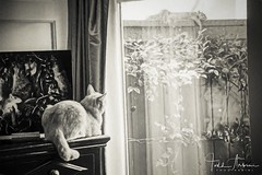 NIK_5355_2019-1568423560720 (toddarbini) Tags: animals cat pet feline squirrel nikon d810 painting
