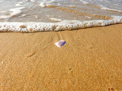 """""""May you always have a shell in your pocket and sand in your shoes..."""" (fl_mala) Tags: lifeisbetterontheisland island parosisland greekislands cyclades ilovegreece greece traveltogreece greatmoment discovergreece beautifulsea wonderfulworld sand sun shell"""