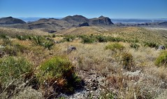 The Rolling Hillsides and Landscape with a View to Goat Mountain (Big Bend National Park)