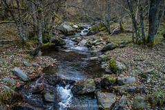 El rincón encantado (SantiMB.Photos) Tags: 2blog 2tumblr 2ig valdetoran valldaran valdaran pirineos pyrenees lleida otoño autumn río river toran bosque forest geo:lat=4281765898 geo:lon=081191854 geotagged santjoandetoran cataluna españa
