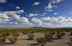 Big Bend - Chihuahua Desert