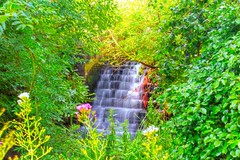 Small waterfalll at Corfe (Chris Atkins65) Tags: dorset corfe waterfall trees flowers
