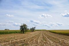 Paysage agraire (Croc'odile67) Tags: nikon d3300 sigma contemporary 18200dcoshsmc paysage landscape arbres trees champ campagne ciel cloud sky nature nuage