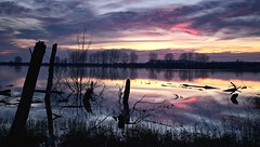 Reflejos al amanecer (pascual 53) Tags: amanecer caos reflejos colores canon eos5ds 50mm largaexpo troncos medera paisaje navarra laguna ablitas lee lucroit