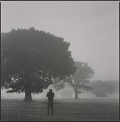 company (steve-jack) Tags: hasselblad 501cm 80mm cb konica xr400 bw c41 film 120 6x6 medium format trees mist hertfordshire tetenal kit epson v500