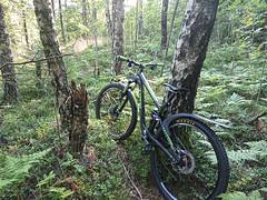 Overgrown trail at Kykkelsrud (mtbboy1993) Tags: rawtherapee sonycameraapp askim kykkelsrud norge norway forest singletrack overgrown mountainbike mtb stisykling sykkeltur exploring skog
