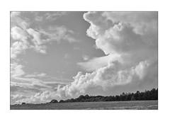 Clouds (K.Pihl) Tags: leicam5 pellicolaanalogica 50mmsummiluxf14 cloudscap monochrome nuages analog kodaktrix400320 hc110e147 blackwhite schwarzweiss bw spikesnaturewolken film clouds