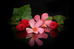 Fun! (Ageeth van Geest) Tags: complementair complementairycolors macro stilleven funny smile fun flower oleander stilllife pink red raspberry reflection smileonsaturday reflectiononblack