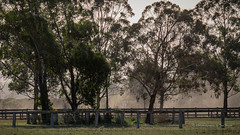 Dust along the trees... (Beckett_1066) Tags: dam hawkesbury fence rural trees dust