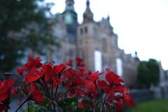 Nordiska Museet (afafa02) Tags: nordiskamuseet stockholm red focus closeup flowers