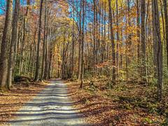 Road Through Fall 2012-11 03 (Jim Dollar) Tags: jimdollar fall greatsmokymountainsnationalpark greenbrier cosby tennessee